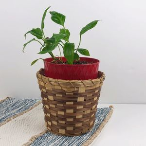 Two-tone Wicker Rattan Woven Planter Basket